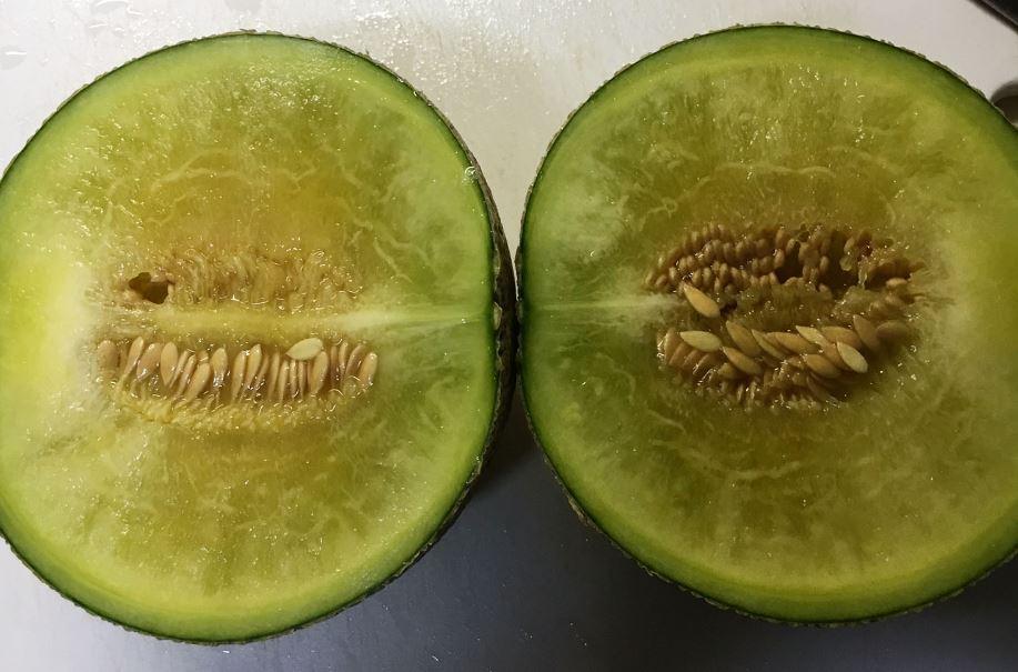 201511_melon02