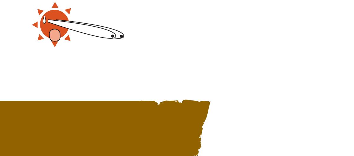 06201603-wani